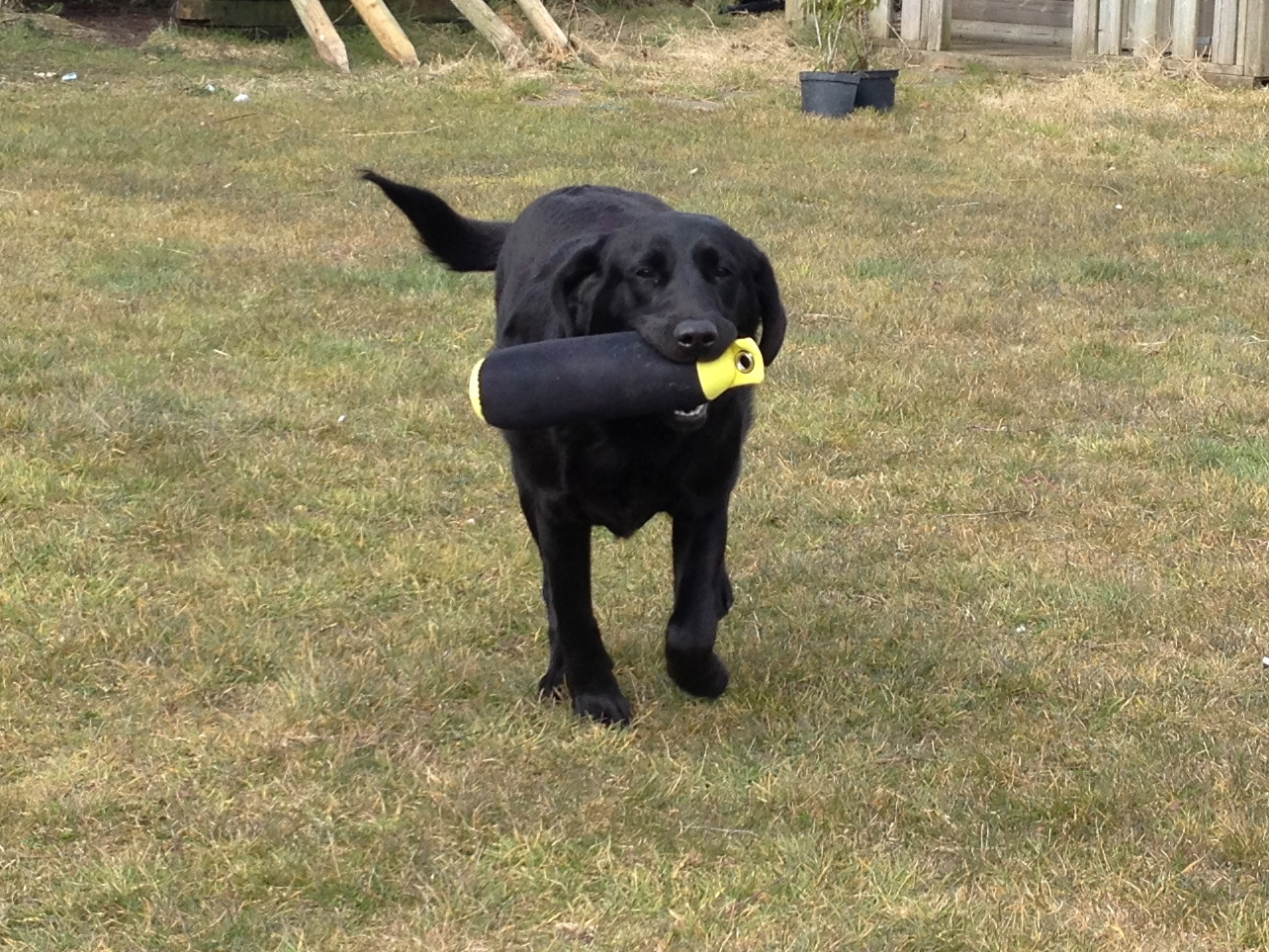 Residential Dog Training North West