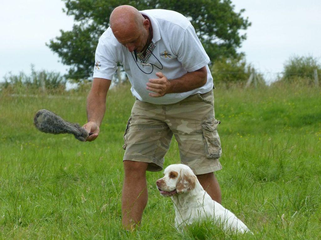 Kj Dog Training
