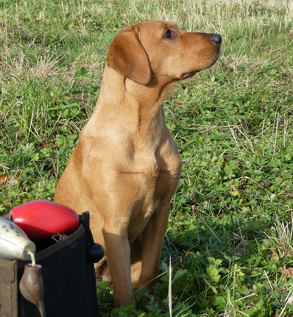 Residential training for dogs and gundogs